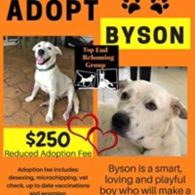 Photo of Byson
