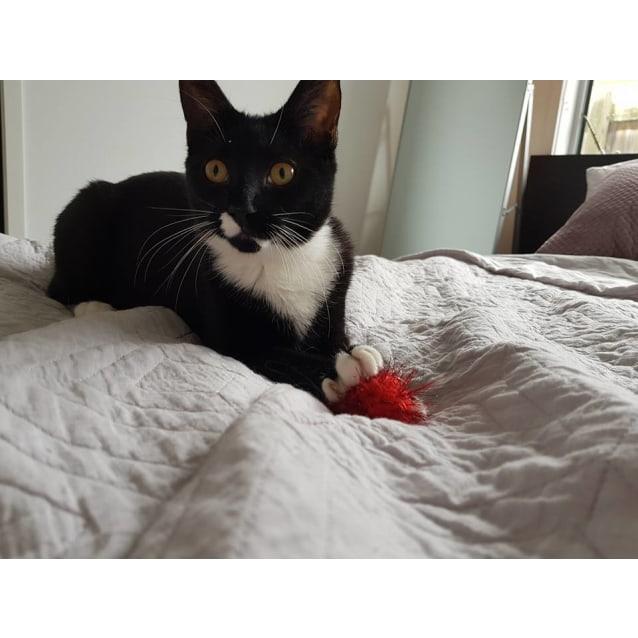 Photo of Billie **Adoption Pending**