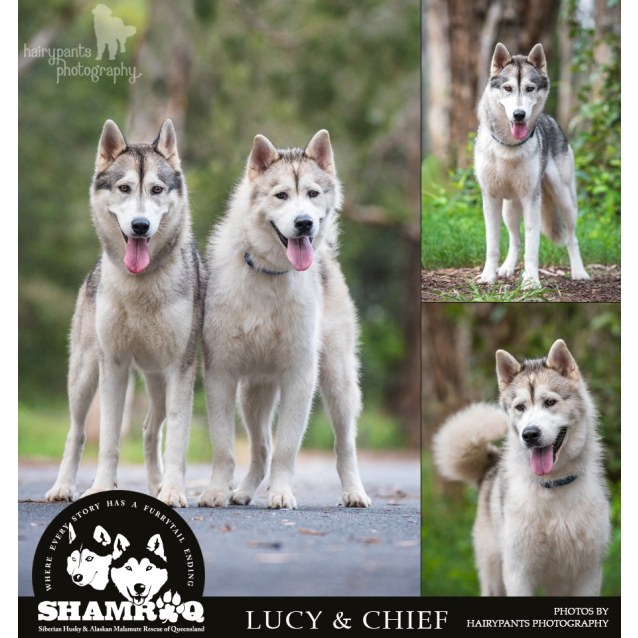 Photo of Lucy & Chief