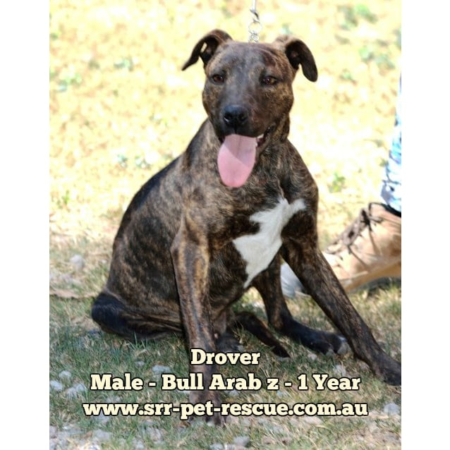 Photo of Drover
