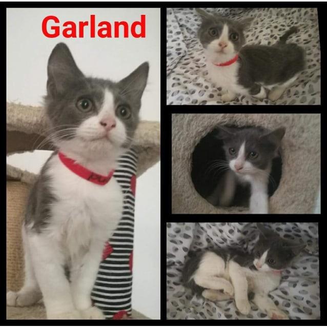 Photo of Garland