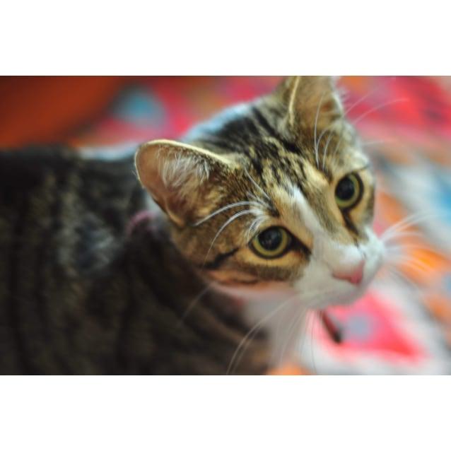 Photo of Rico