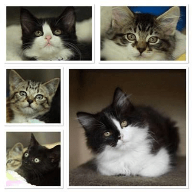 Photo of Various Kittens Various