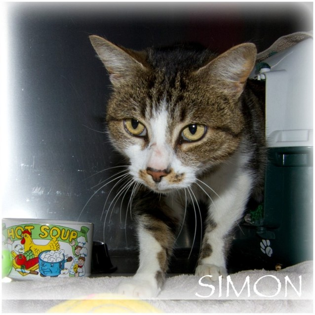 Photo of Simon