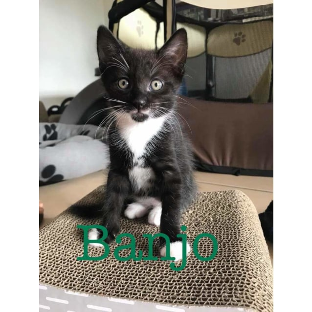 Photo of Banjo