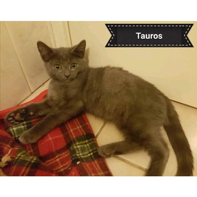 Photo of Tauros