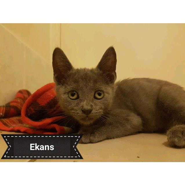 Photo of Ekans
