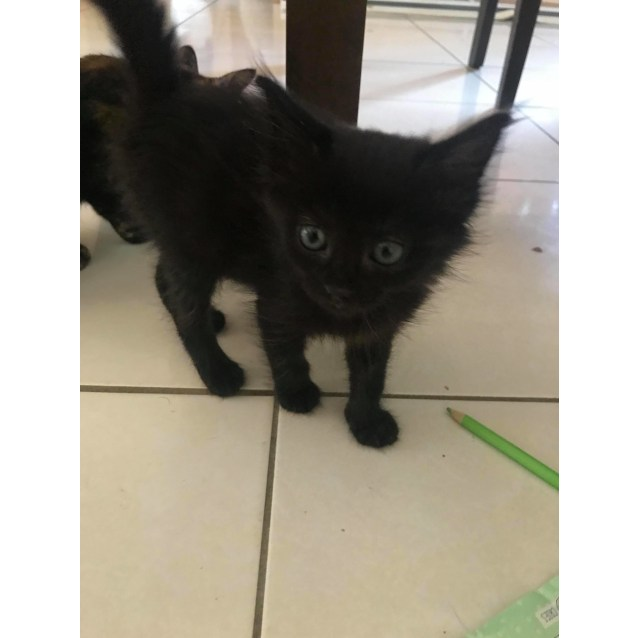 Photo of Fuzzy