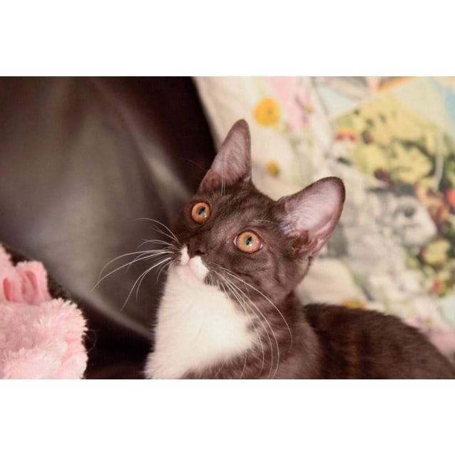 Photo of Magenta