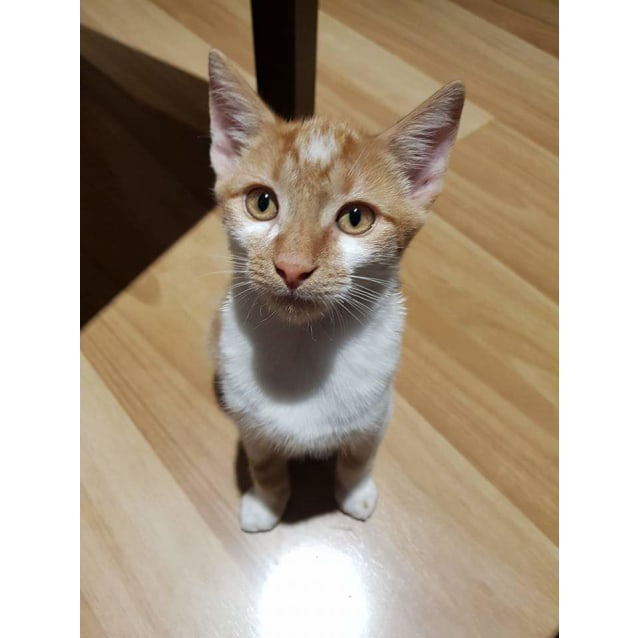 Photo of Neddy