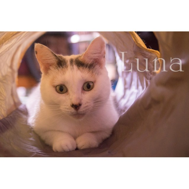 Photo of Sweet Luna