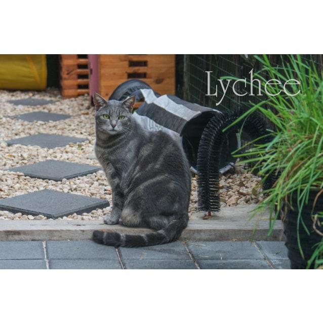 Photo of Sweet Little Lychee