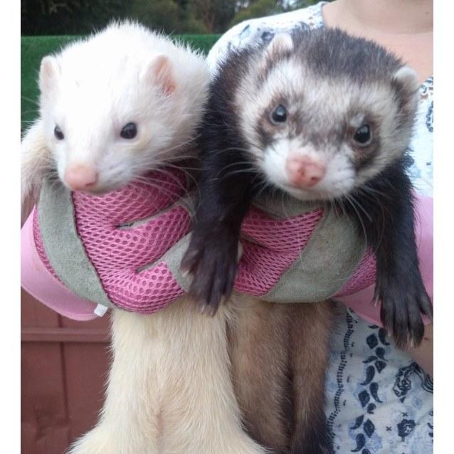 Photo of Milli & Joey