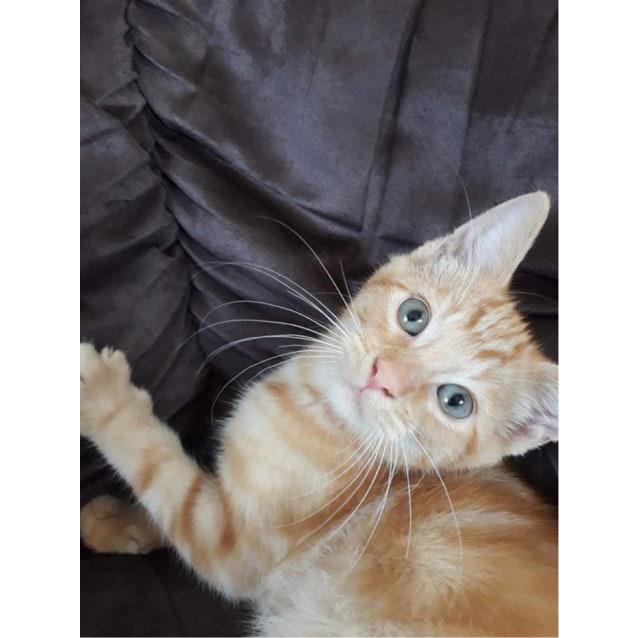 Photo of Alvin