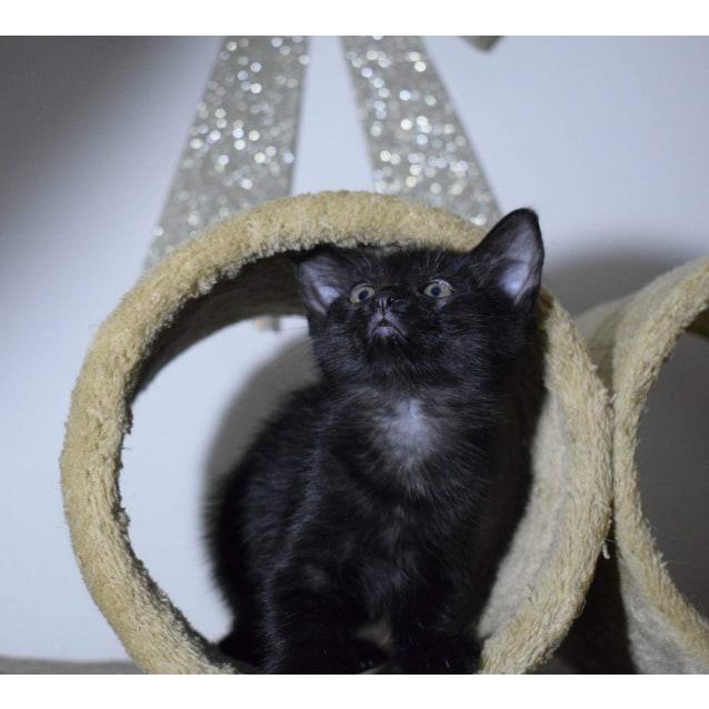 Photo of Coco 💜