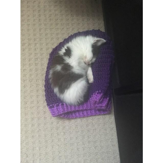 Photo of Panda