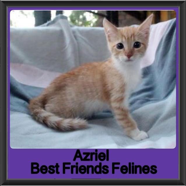 Photo of Azriel