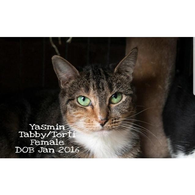 Photo of Yasmin