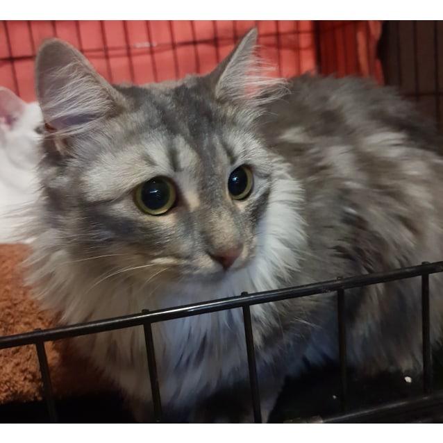 Photo of Charlotte **On Hold Adoption Fee Paid