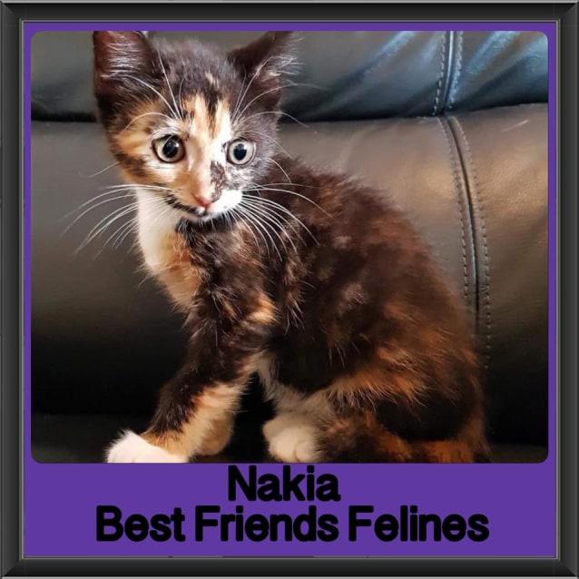 Photo of Nakia