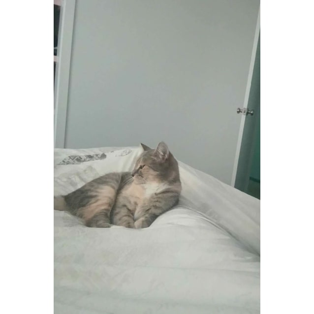 Photo of Winnie (Located In Bulleen)