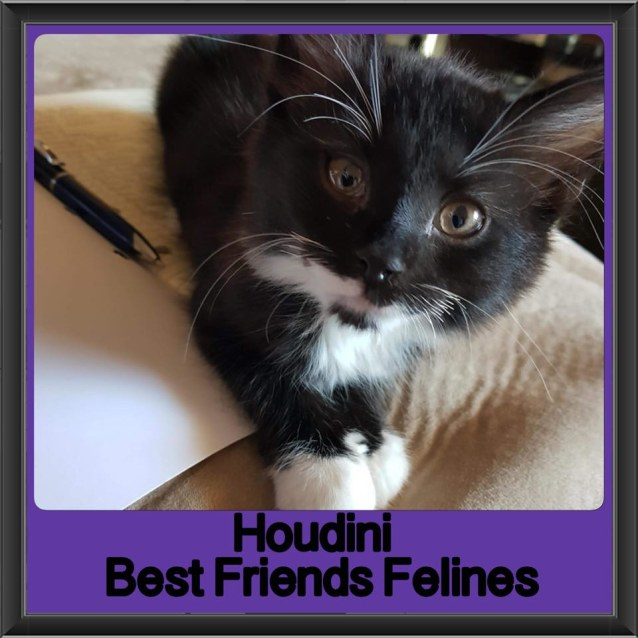 Photo of Houdini