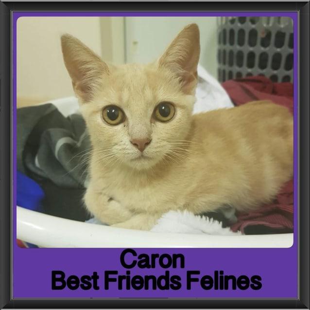 Photo of Caron