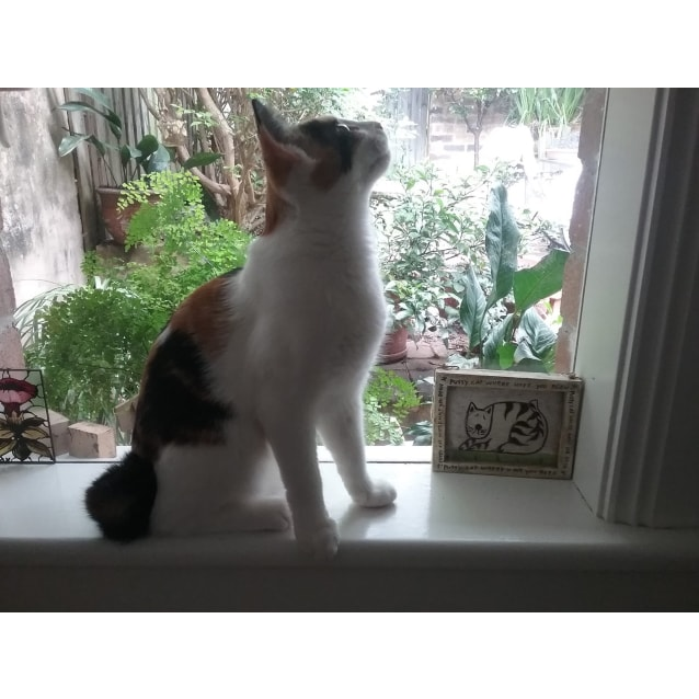 Photo of Camilla