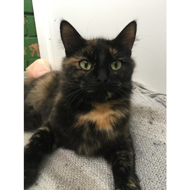 Photo of Milly Id40150