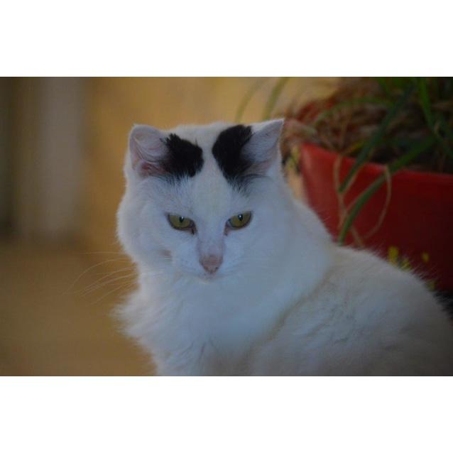 Photo of Minty   Cc0060