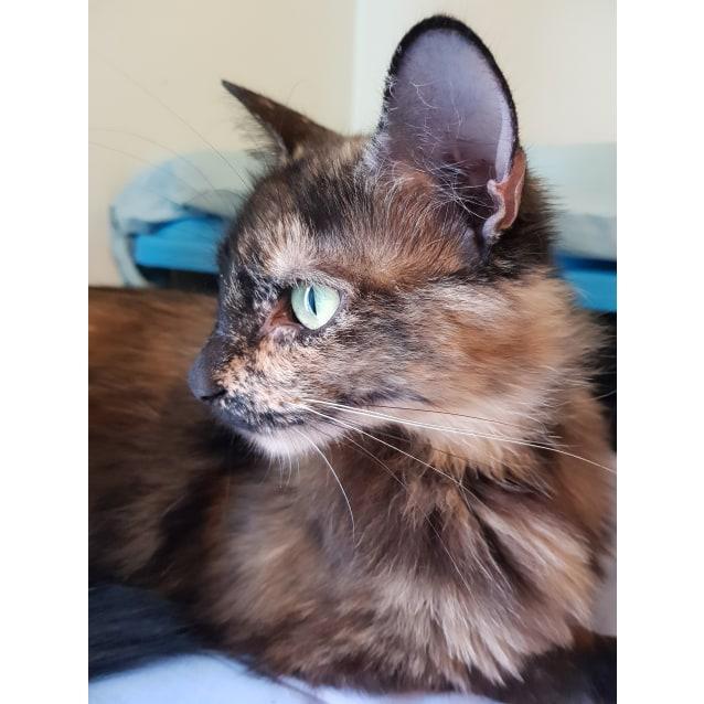 Photo of Pania