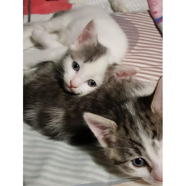 Photo of Eli, Elliott & Ernie