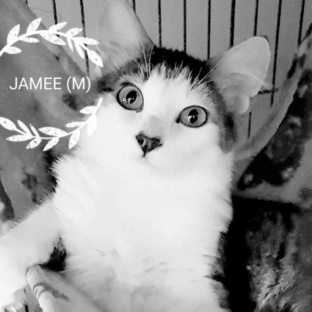 Photo of Jamee