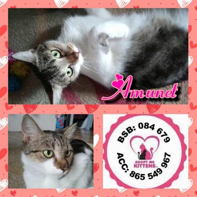 Photo of Amunet
