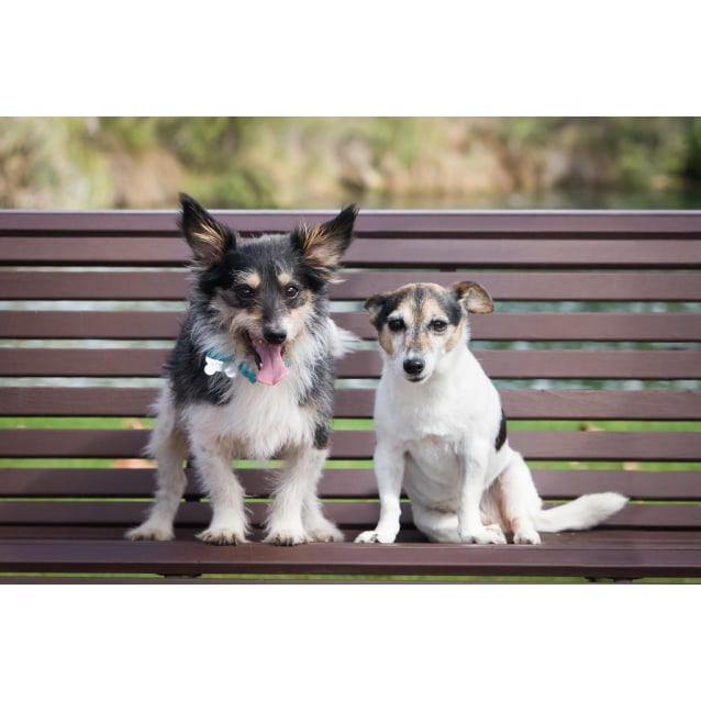 Photo of Holly And Gizmo **On Hold**