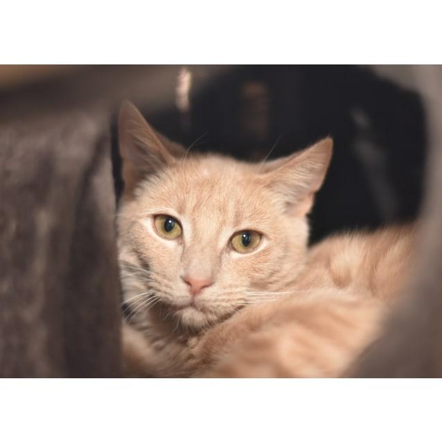 Photo of Juniper ***2nd Chance Cat Rescue***