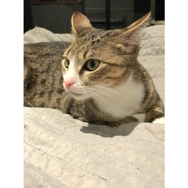 Photo of Harriet