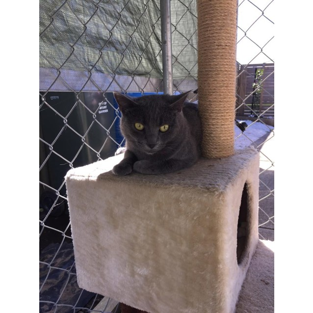 Photo of Smoky