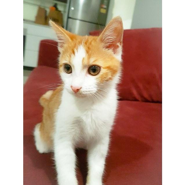 Photo of Marcelus