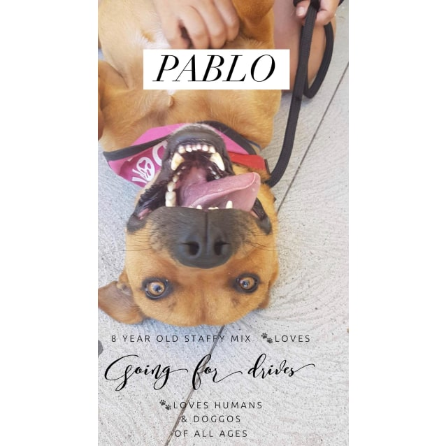 Photo of Pablo