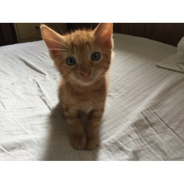 Photo of Cheeto