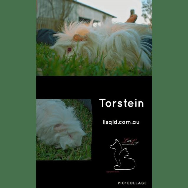 Photo of Torstein