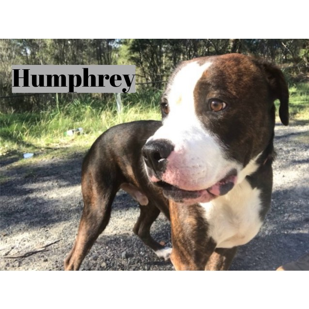 Photo of Humphrey