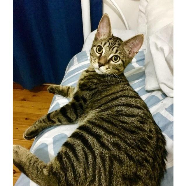 Photo of The 3 Amigo's   The Friendliest Kitties In Town
