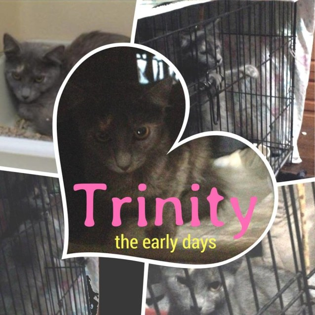 Photo of Trinity If002 18