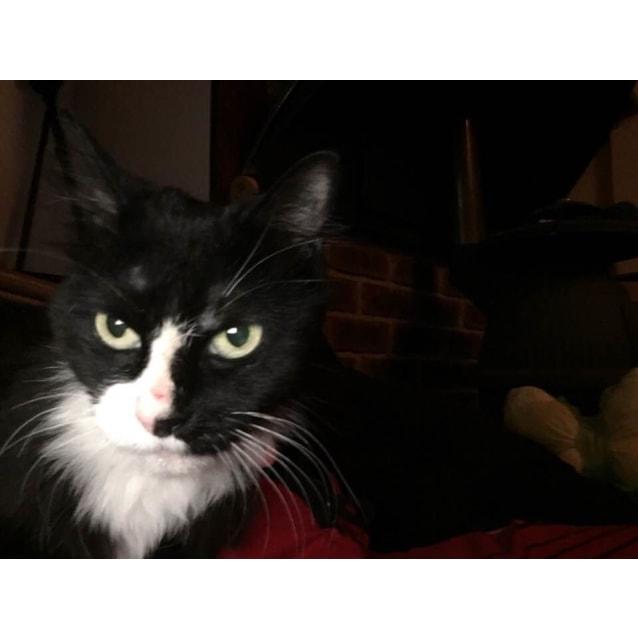 Photo of Lola If011 18