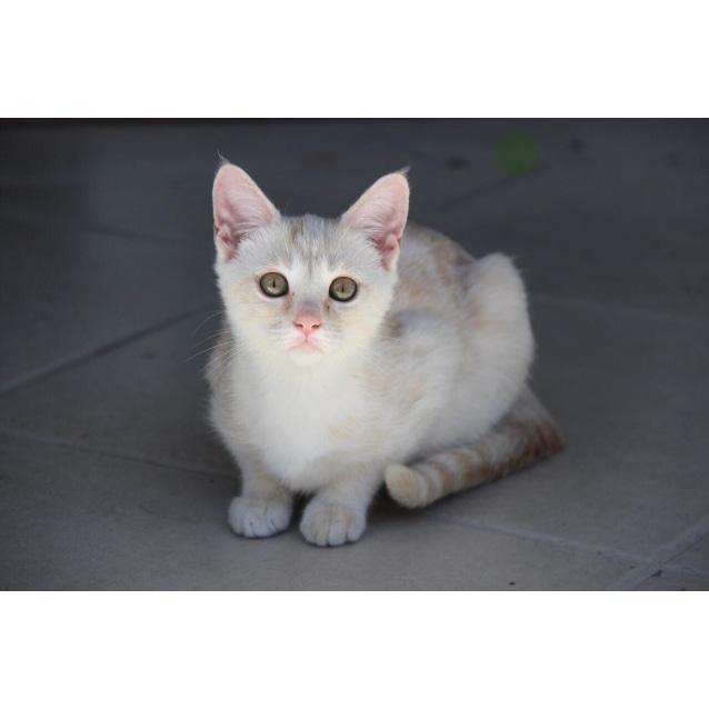 Photo of Kira