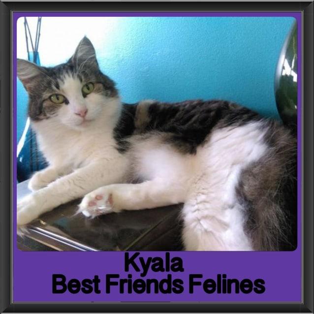 Photo of Kyala