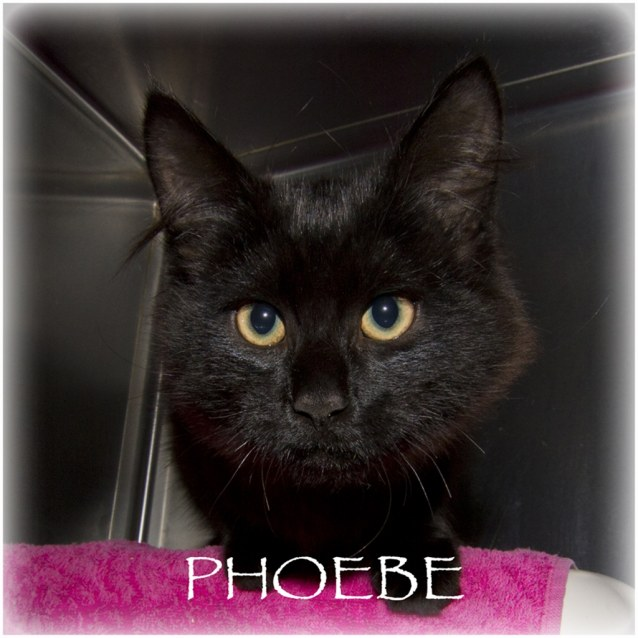 Photo of Phoebe