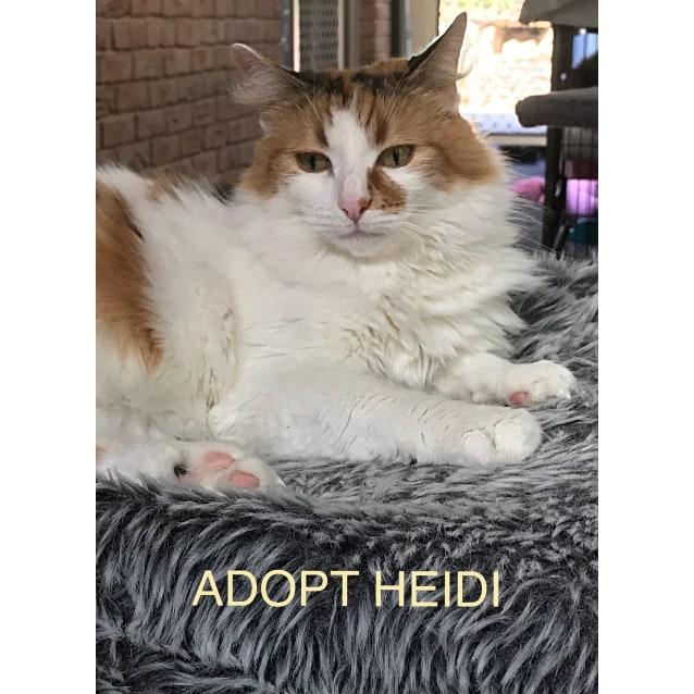Photo of Heidi